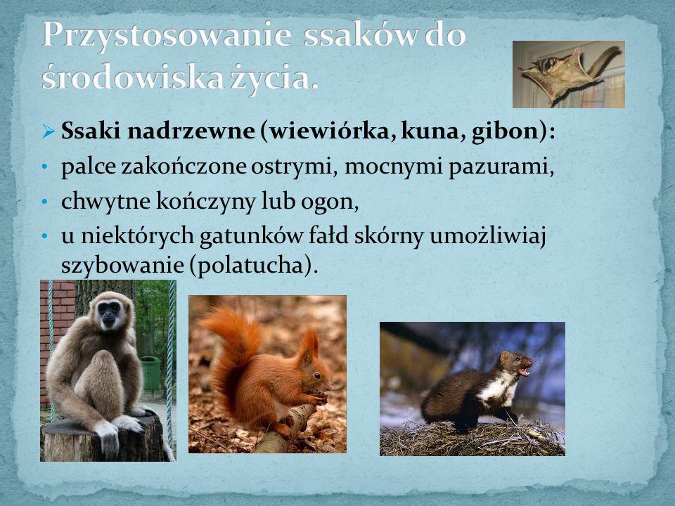  Ssaki nadrzewne (wiewiórka, kuna, gibon): palce zakończone ostrymi, mocnymi pazurami, chwytne kończyny lub ogon, u niektórych gatunków fałd skórny u
