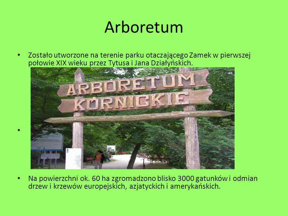 Arboretum Zostało utworzone na terenie parku otaczającego Zamek w pierwszej połowie XIX wieku przez Tytusa i Jana Działyńskich. Na powierzchni ok. 60