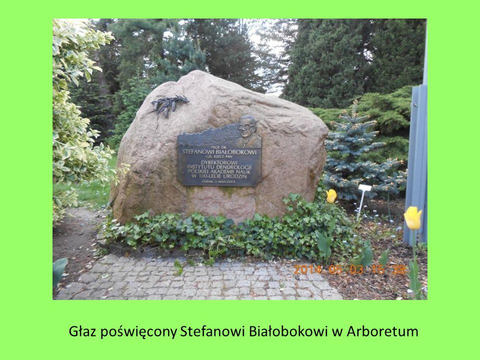 Głaz poświęcony Stefanowi Białobokowi w Arboretum