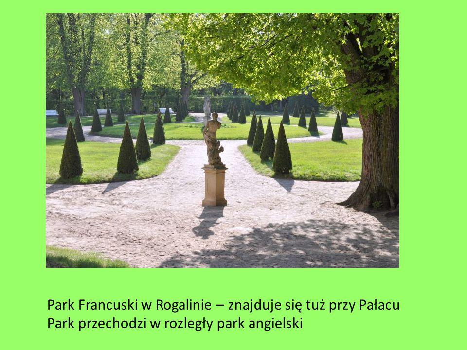 Park Francuski w Rogalinie – znajduje się tuż przy Pałacu Park przechodzi w rozległy park angielski