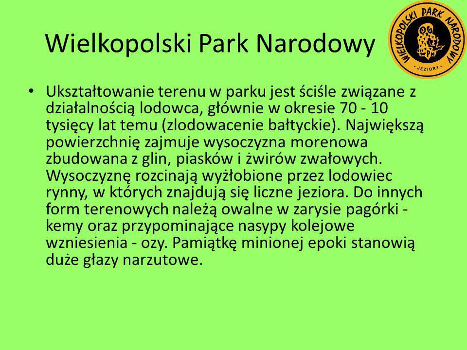 Wielkopolski Park Narodowy Ukształtowanie terenu w parku jest ściśle związane z działalnością lodowca, głównie w okresie 70 - 10 tysięcy lat temu (zlo
