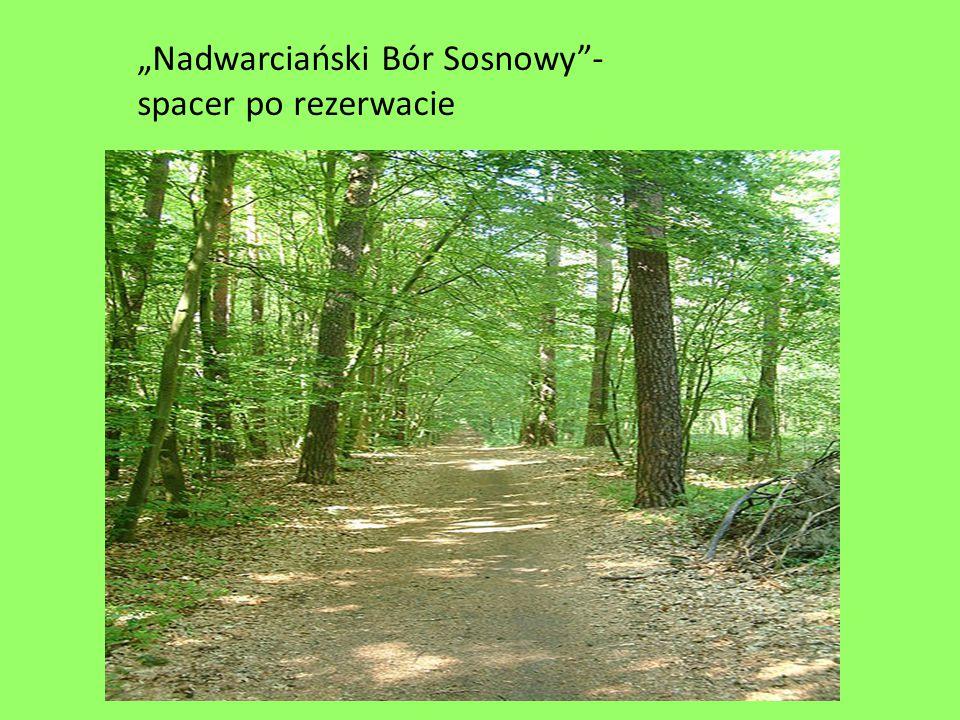 """""""Nadwarciański Bór Sosnowy""""- spacer po rezerwacie"""
