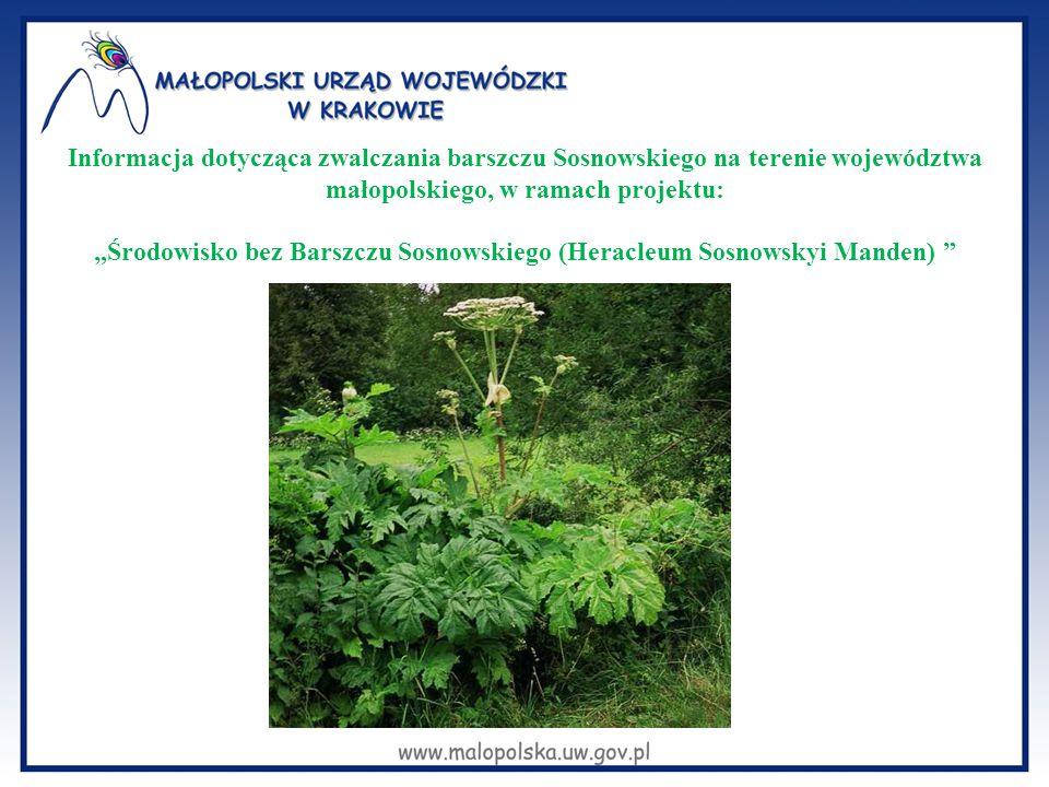 Barszcz Sosnowskiego Barszcz Sosnowskiego jest rośliną inwazyjną, szeroko rozpowszechnioną na terenie województwa małopolskiego.
