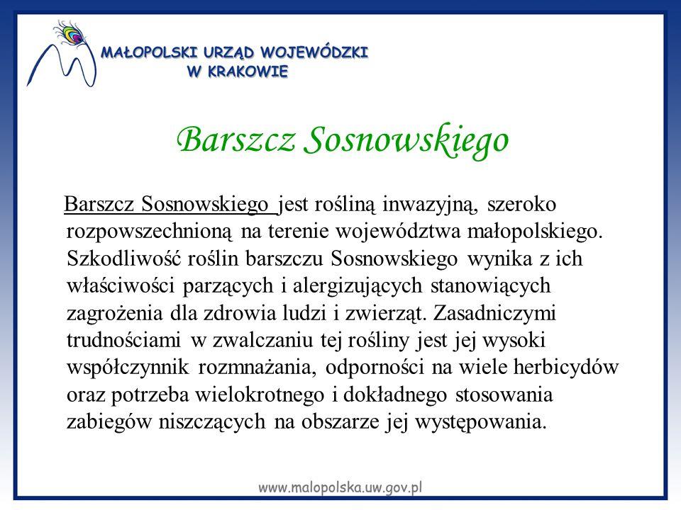 Barszcz Sosnowskiego Skupiska barszczu Sosnowskiego zlokalizowane są w 43 gminach położonych na terenie 14 powiatów województwa małopolskiego, głównie na nieużytkach oraz w pobliżu cieków wodnych w tym również na obszarach Natura2000 - (wzdłuż rzeki Dunajec oraz na terenie dolinek jurajskich).