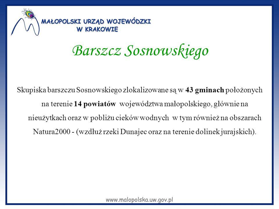 Barszcz Sosnowskiego Skupiska barszczu Sosnowskiego zlokalizowane są w 43 gminach położonych na terenie 14 powiatów województwa małopolskiego, głównie