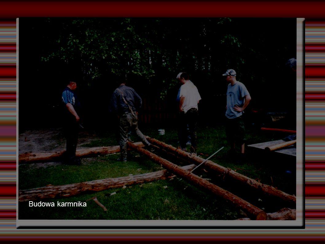 Budowa karmnika