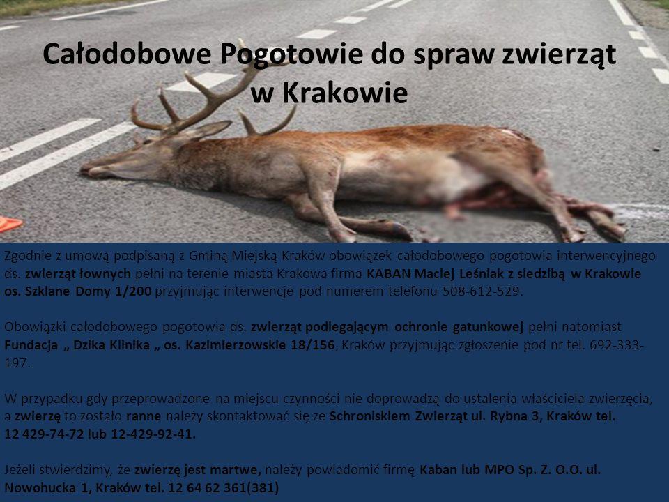 12 Całodobowe Pogotowie do spraw zwierząt w Krakowie Zgodnie z umową podpisaną z Gminą Miejską Kraków obowiązek całodobowego pogotowia interwencyjnego ds.