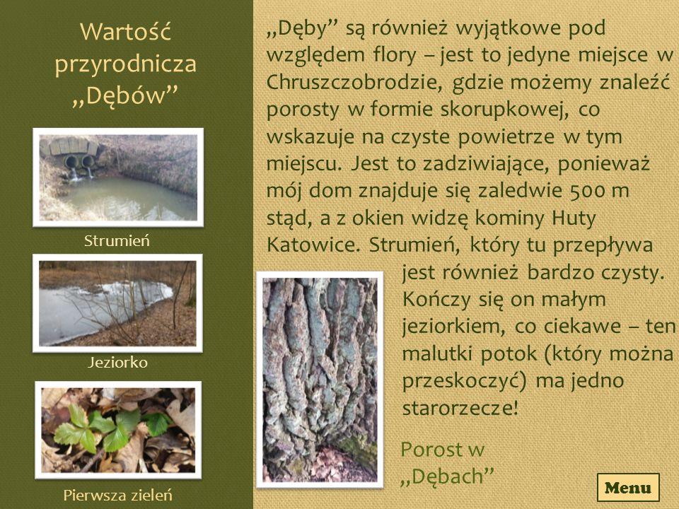 """Rezerwat """"Góra Chełm w Łazach Jest to rezerwat typu leśnego utworzony w 1957 roku."""