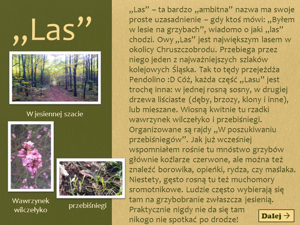 Ochrona lasów w mojej okolicy Lasy w mojej okolicy przynależą do Nadleśnictwa Siewierz.