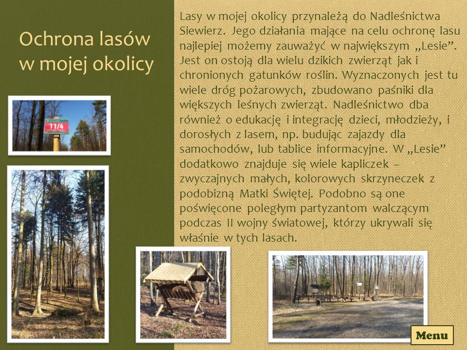 """""""Las Północny Jest to drugi największy las w okolicach Chruszczobrodu, choć nie aż tak ciekawy jak """"Las , czy """"Dęby ."""