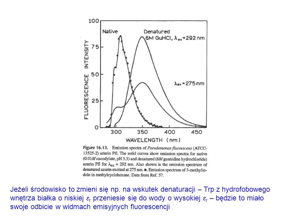 Jeżeli środowisko to zmieni się np. na wskutek denaturacji – Trp z hydrofobowego wnętrza białka o niskiej  r przeniesie się do wody o wysokiej  r –