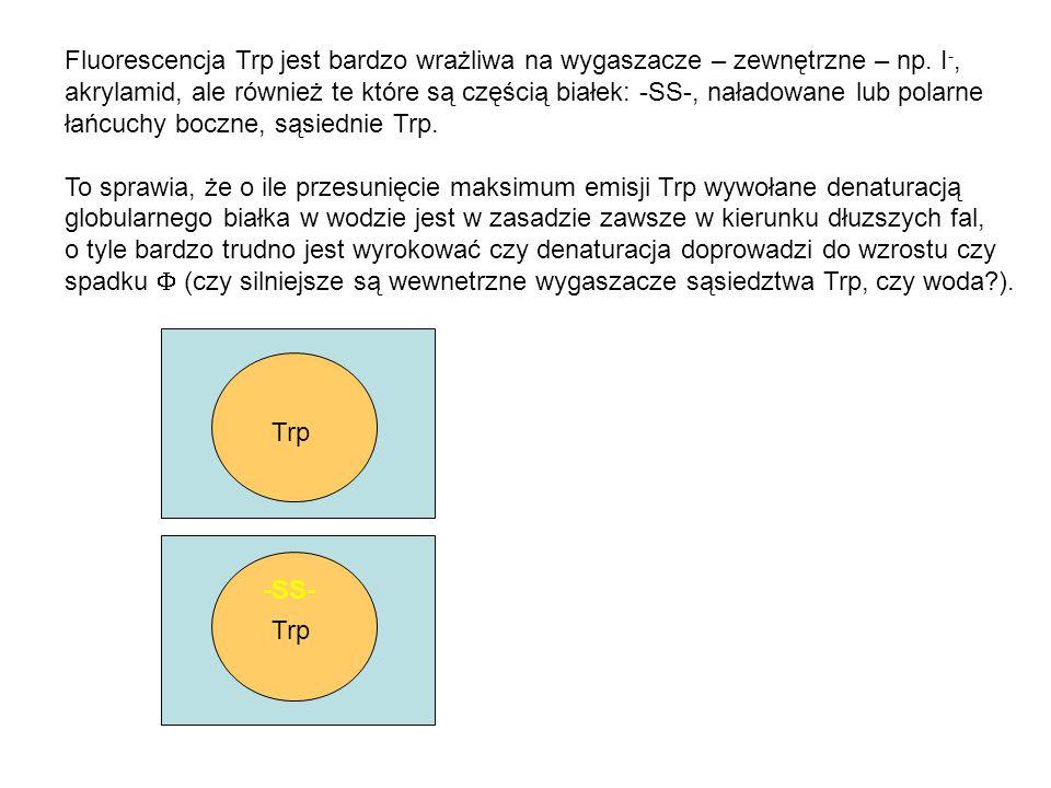 Fluorescencja Trp jest bardzo wrażliwa na wygaszacze – zewnętrzne – np. I -, akrylamid, ale również te które są częścią białek: -SS-, naładowane lub p