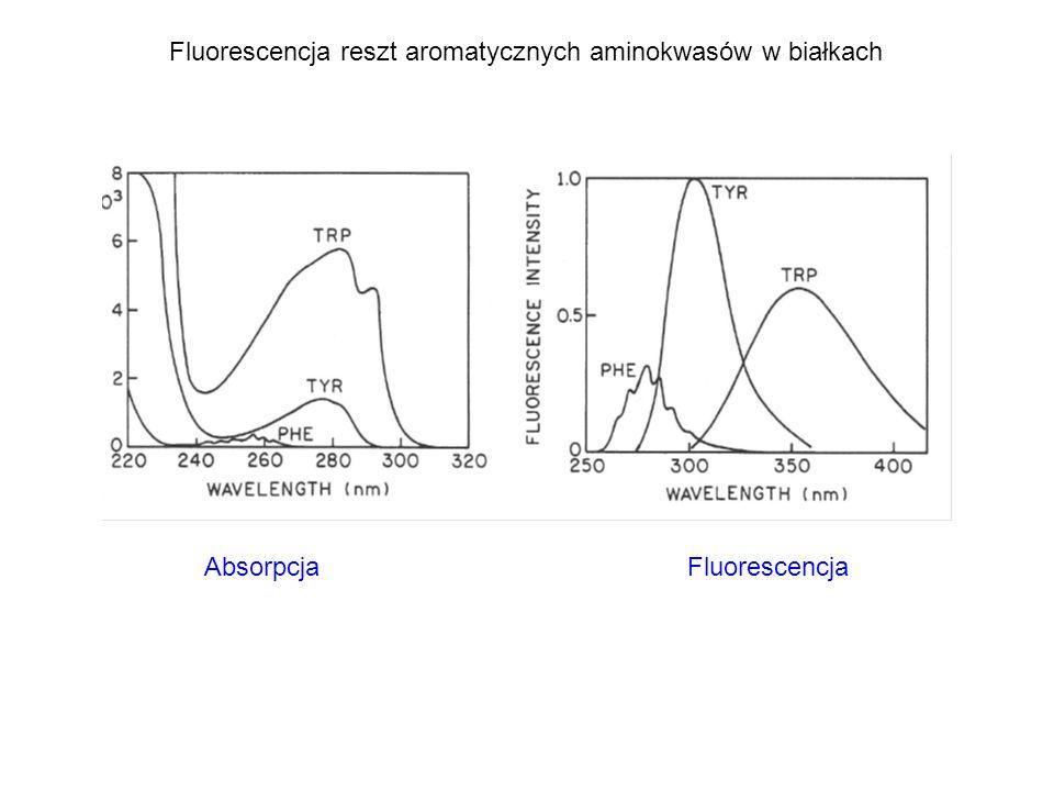 Fluorescencja reszt aromatycznych aminokwasów w białkach Absorpcja Fluorescencja