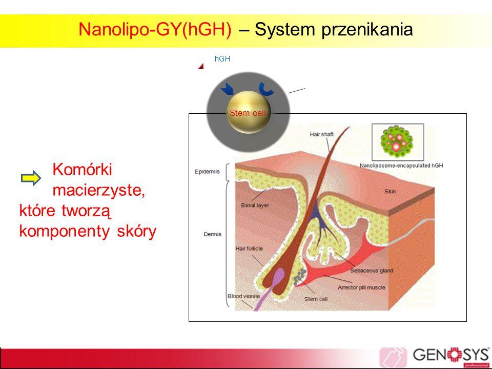 Komórki macierzyste, które tworzą komponenty skóry Stem cell hGH Stem cell Nanolipo-GY(hGH) – System przenikania