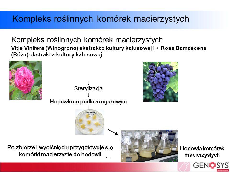 ↓ Sterylizacja ↓ Hodowla na podłożu agarowym ↓ Hodowla komórek macierzystych ↓ Po zbiorze i wyciśnięciu przygotowuje się komórki macierzyste do hodowl