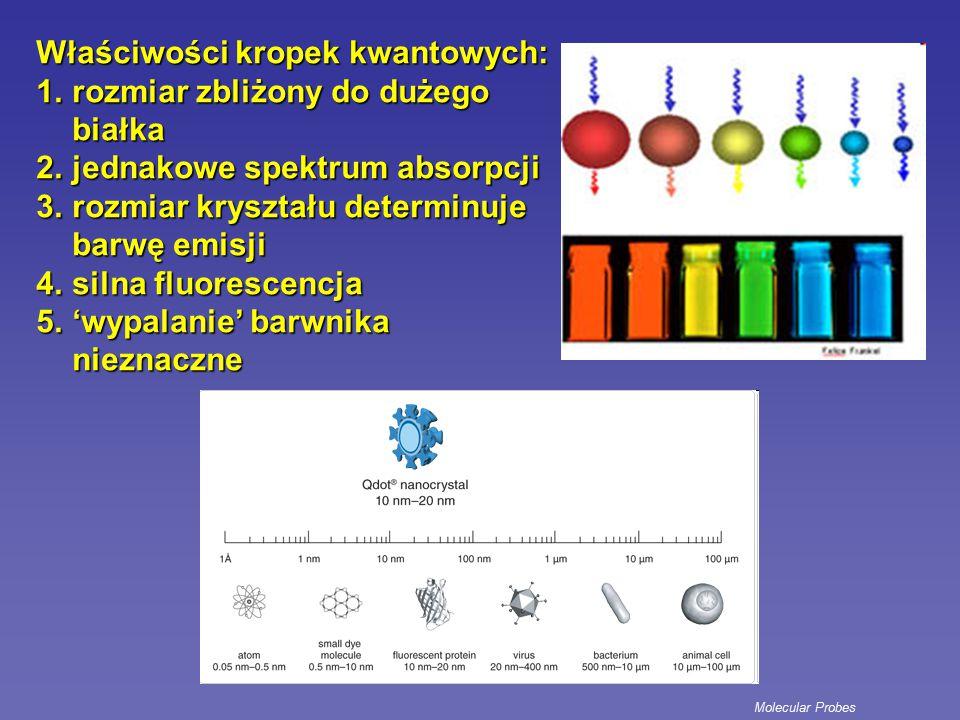 Układ optyczny najczęściej wykorzystywane lasery: argonowy – niebieski (488nm) diodowy – czerwony (635nm) analiza: zielony, żółty, czerwony, daleki czerwony