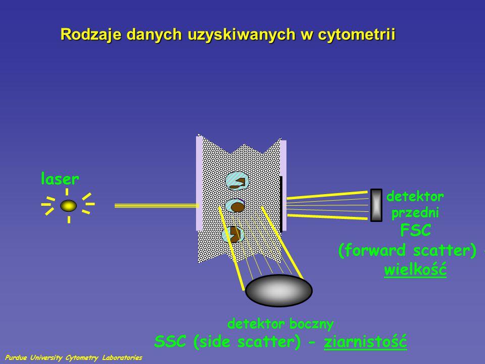 Rozproszenie na wprost —Określa wielkość komórki —Mierzone wzdłuż osi padającego lasera na wprost Rozproszenie boczne—światło lasaerowe odbite i rozproszone —Określa gęstość i liczbę ziarnistości (względnie) —Mierzona pod kątem 90° w stosunku do wiązki laserowej Detektor rozproszenia pod kątem 90 stopni- granulacja komórek i obecność struktur komórkowych Detektor rozproszenia na wprost – informacja o wielkości komórki lub cząsteczki badanej Laser SSC FSC