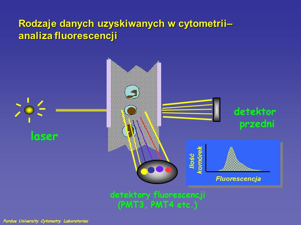 Zasady analizy FACS – analiza fluorescencji zielona fluorescencja żółta fluorescencja Purdue University Cytometry Laboratories