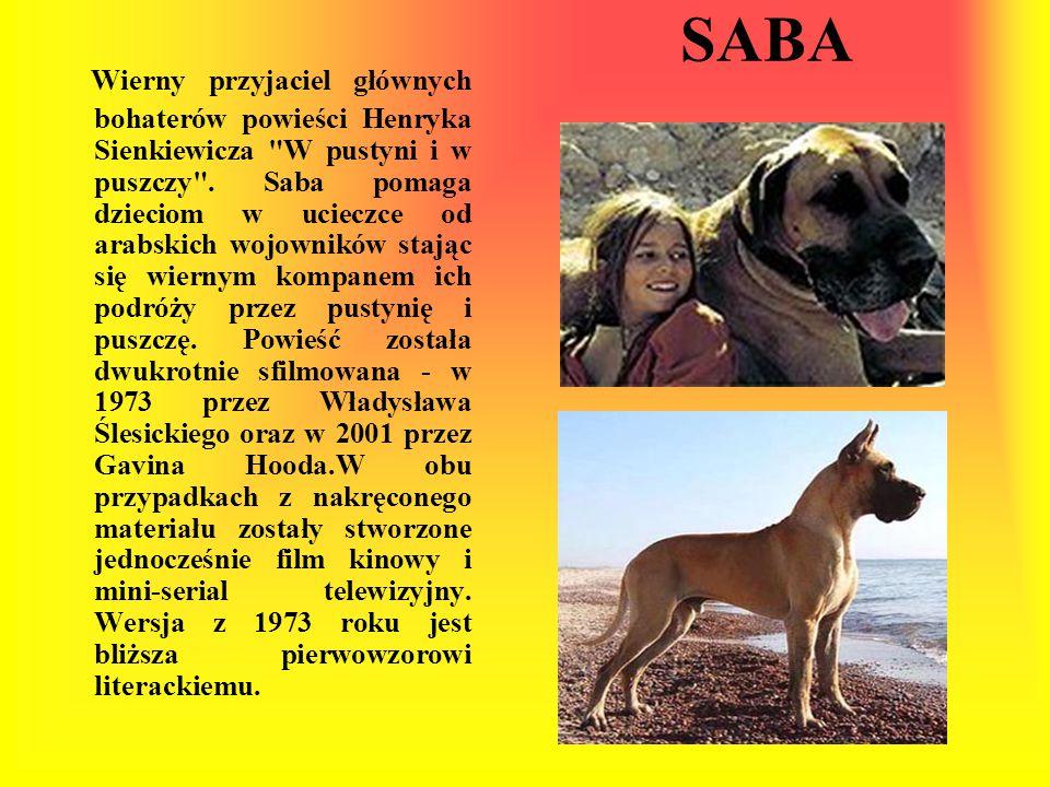 SABA Wierny przyjaciel głównych bohaterów powieści Henryka Sienkiewicza