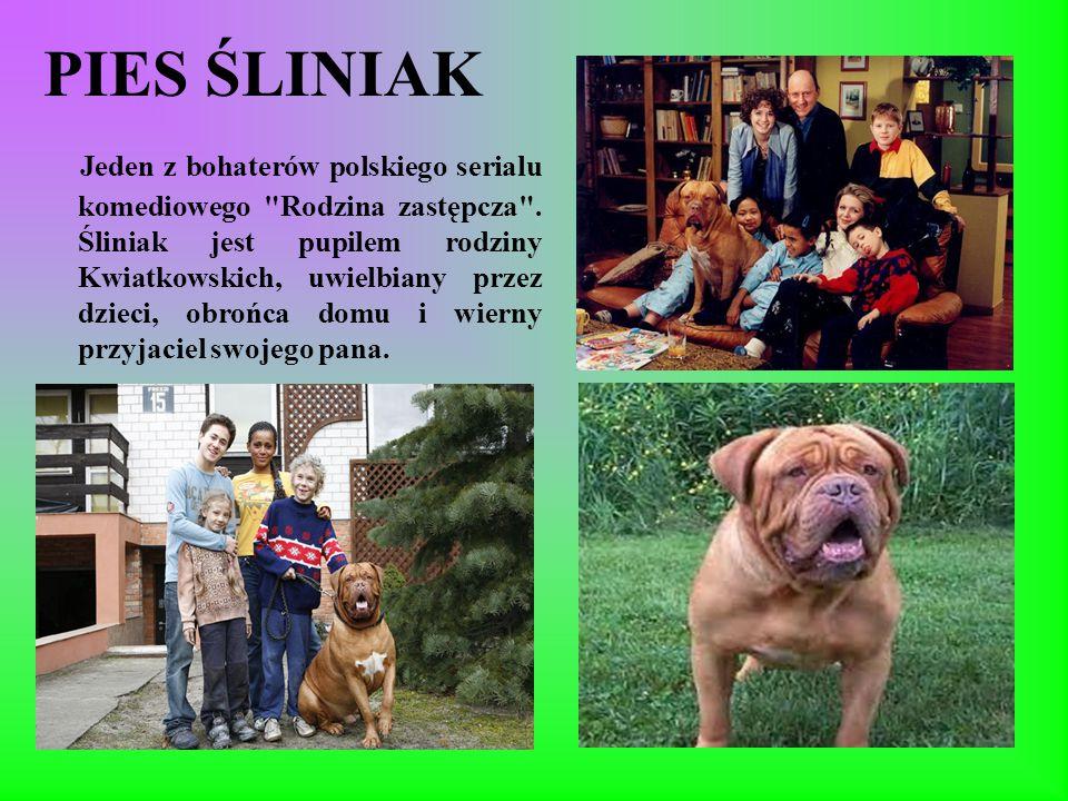 PIES ŚLINIAK Jeden z bohaterów polskiego serialu komediowego