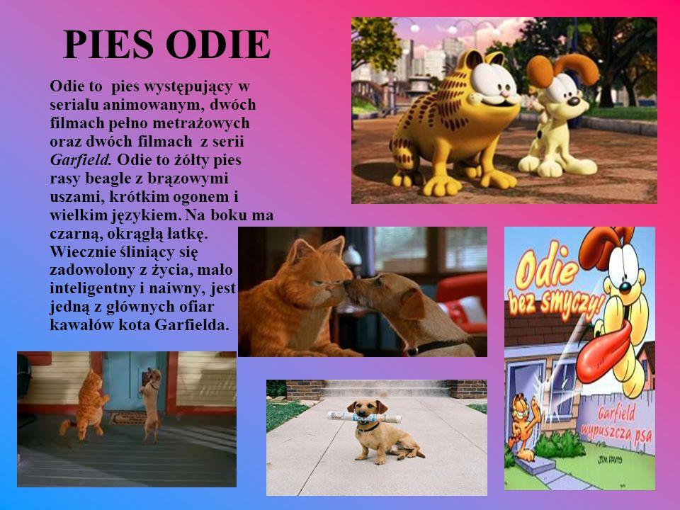 PIES ODIE Odie to pies występujący w serialu animowanym, dwóch filmach pełno metrażowych oraz dwóch filmach z serii Garfield. Odie to żółty pies rasy