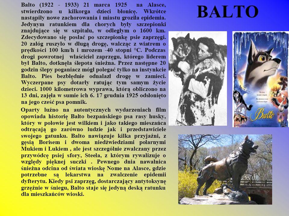 BALTO Balto (1922 - 1933) 21 marca 1925 na Alasce, stwierdzono u kilkorga dzieci błonicę. Wkrótce nastąpiły nowe zachorowania i miastu groziła epidemi