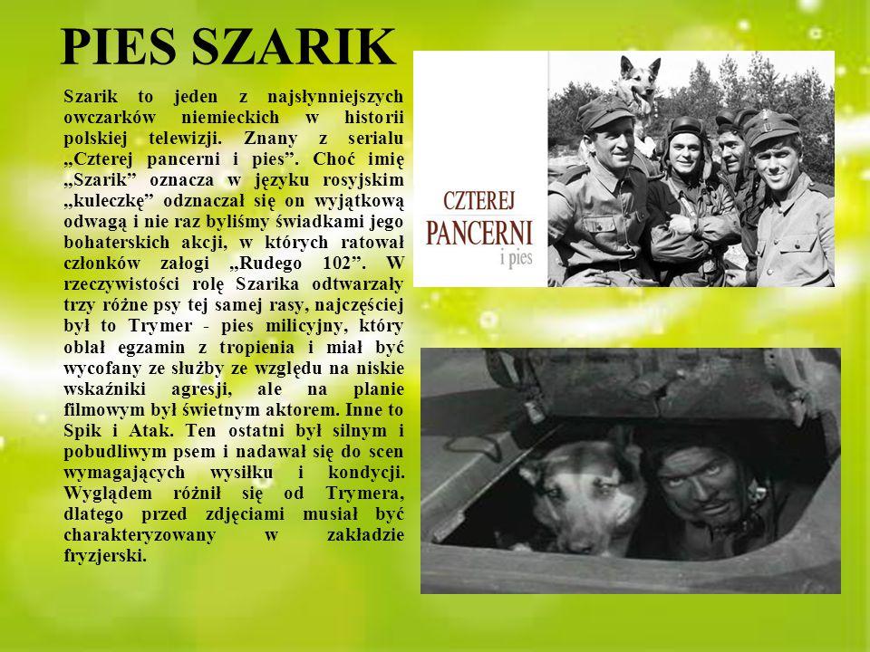 """PIES SZARIK Szarik to jeden z najsłynniejszych owczarków niemieckich w historii polskiej telewizji. Znany z serialu """"Czterej pancerni i pies"""". Choć im"""
