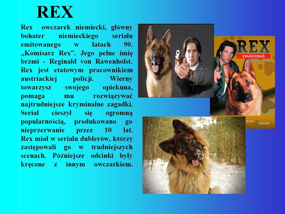 """REX Rex owczarek niemiecki, główny bohater niemieckiego serialu emitowanego w latach 90. """"Komisarz Rex"""". Jego pełne imię brzmi - Reginald von Rawenhol"""