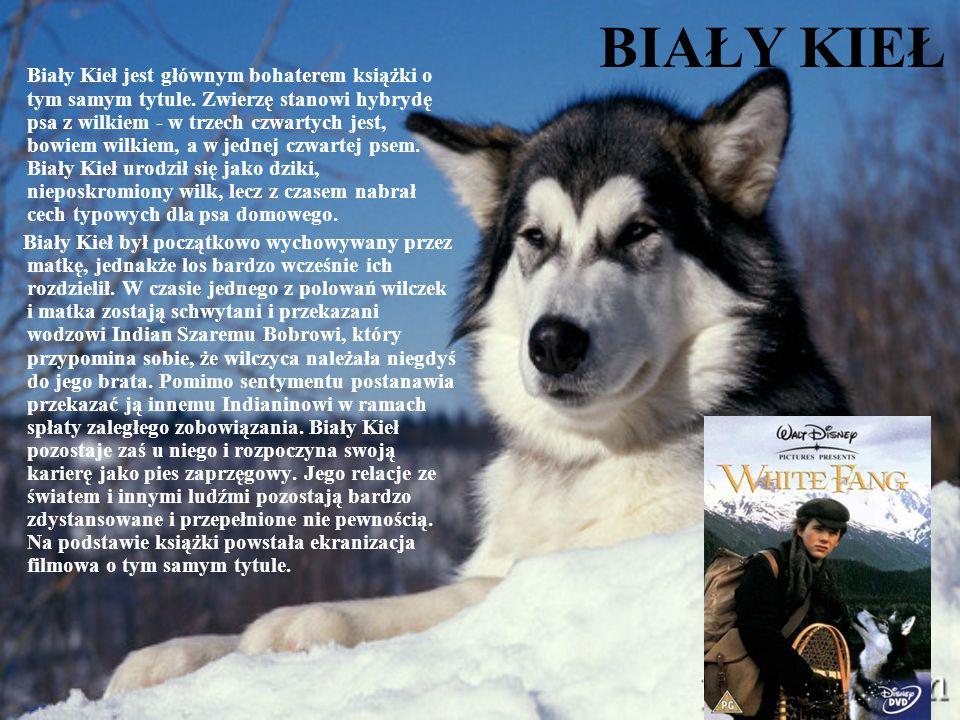 BIAŁY KIEŁ Biały Kieł jest głównym bohaterem książki o tym samym tytule. Zwierzę stanowi hybrydę psa z wilkiem - w trzech czwartych jest, bowiem wilki