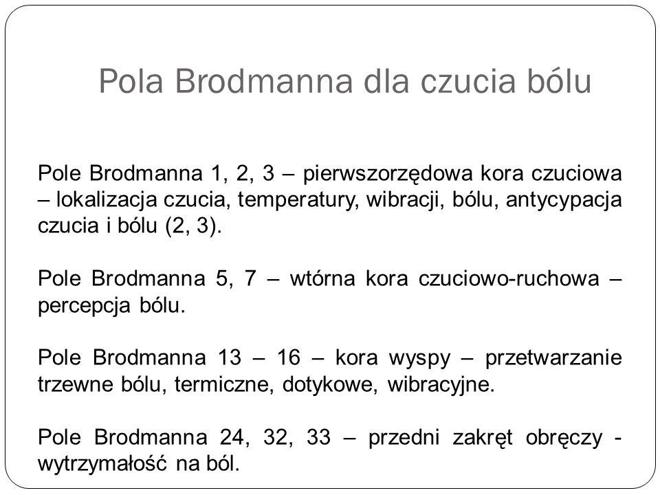 Pola Brodmanna dla czucia bólu Pole Brodmanna 1, 2, 3 – pierwszorzędowa kora czuciowa – lokalizacja czucia, temperatury, wibracji, bólu, antycypacja c