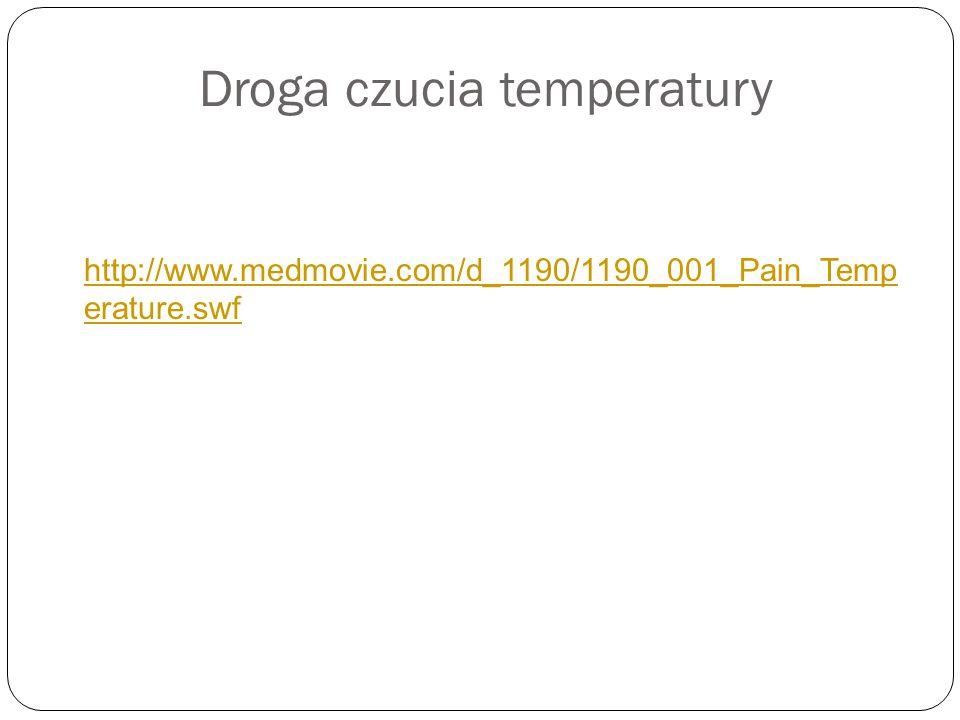 Droga czucia temperatury http://www.medmovie.com/d_1190/1190_001_Pain_Temp erature.swf