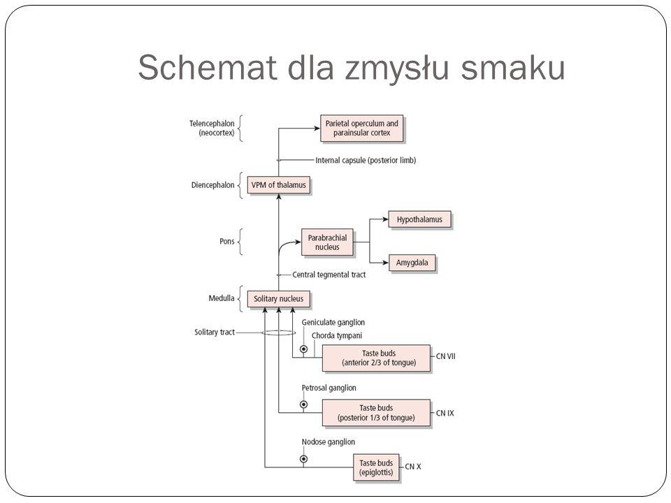 Schemat dla zmysłu smaku