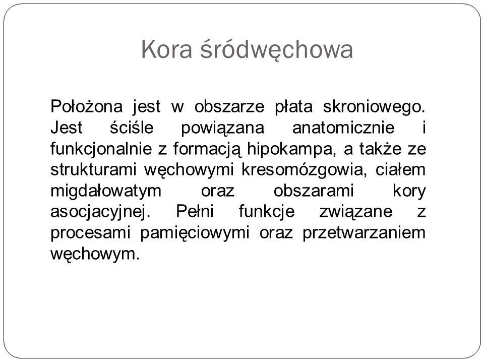 Kora śródwęchowa Położona jest w obszarze płata skroniowego. Jest ściśle powiązana anatomicznie i funkcjonalnie z formacją hipokampa, a także ze struk