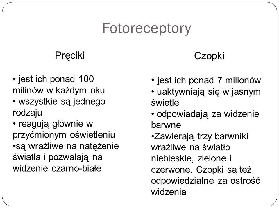 Fotoreceptory Pręciki jest ich ponad 100 milinów w każdym oku wszystkie są jednego rodzaju reagują głównie w przyćmionym oświetleniu są wrażliwe na na