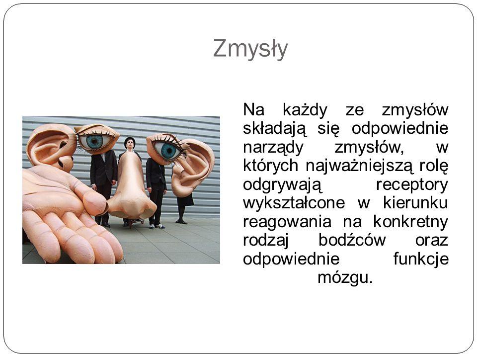 Bodźce słuchowe różnej częstotliwości powodują drgania określonych części błony podstawnej.
