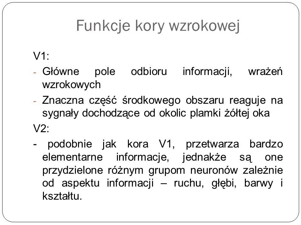 Funkcje kory wzrokowej V1: - Główne pole odbioru informacji, wrażeń wzrokowych - Znaczna część środkowego obszaru reaguje na sygnały dochodzące od oko