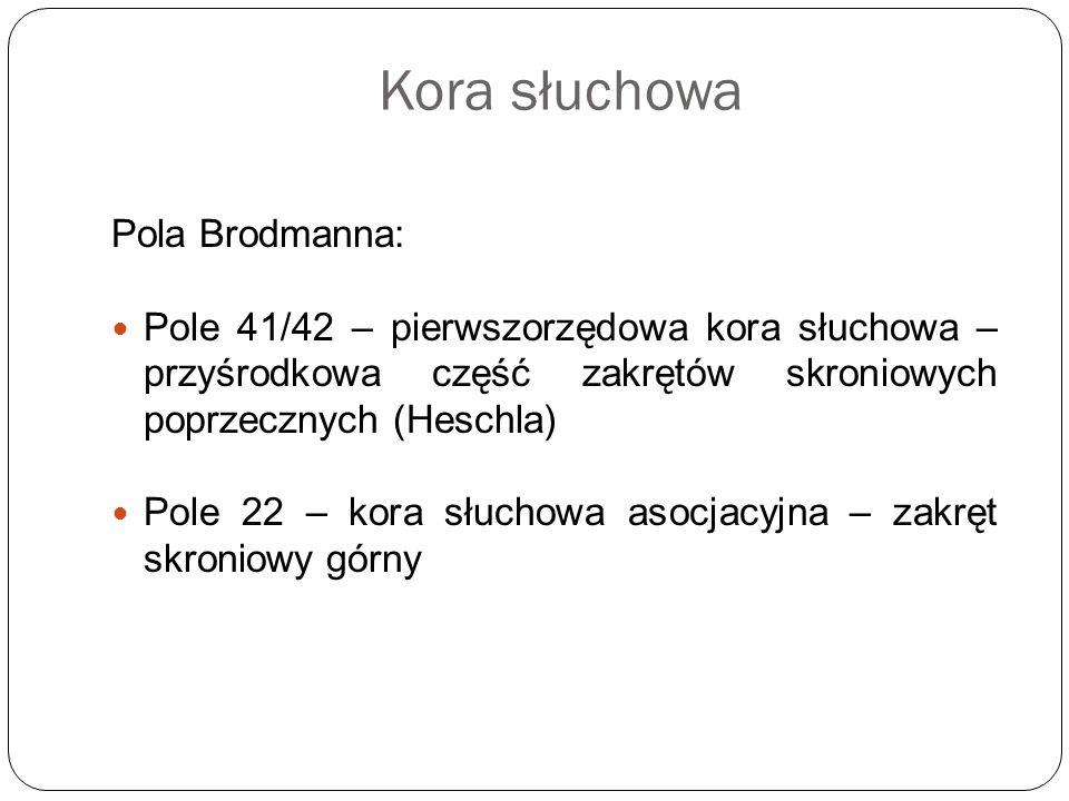Kora słuchowa Pola Brodmanna: Pole 41/42 – pierwszorzędowa kora słuchowa – przyśrodkowa część zakrętów skroniowych poprzecznych (Heschla) Pole 22 – ko