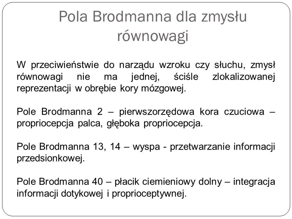 Pola Brodmanna dla zmysłu równowagi W przeciwieństwie do narządu wzroku czy słuchu, zmysł równowagi nie ma jednej, ściśle zlokalizowanej reprezentacji