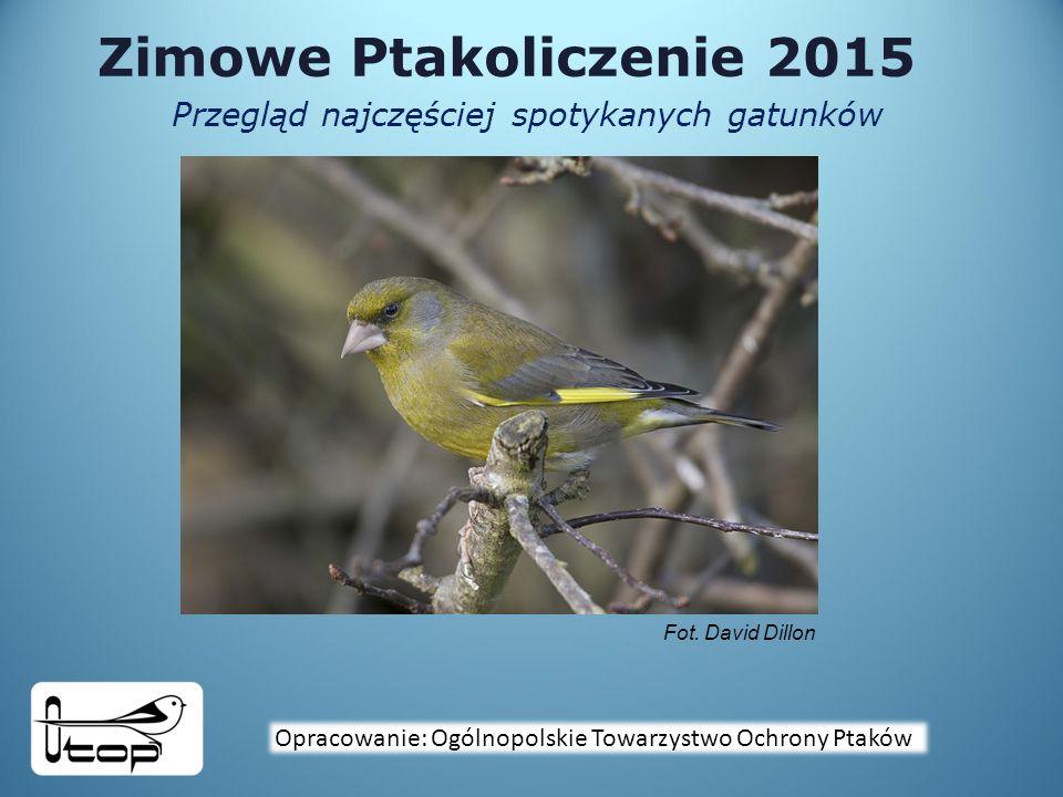 Zimowe Ptakoliczenie 2015 Przegląd najczęściej spotykanych gatunków Opracowanie: Ogólnopolskie Towarzystwo Ochrony Ptaków Fot.