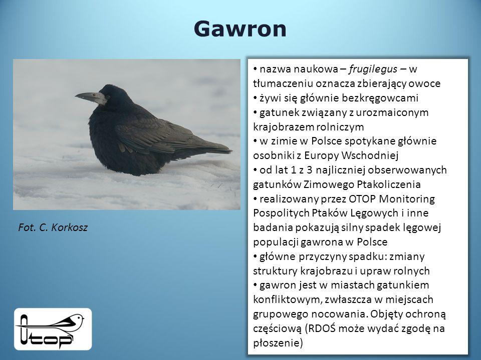 Gawron nazwa naukowa – frugilegus – w tłumaczeniu oznacza zbierający owoce żywi się głównie bezkręgowcami gatunek związany z urozmaiconym krajobrazem rolniczym w zimie w Polsce spotykane głównie osobniki z Europy Wschodniej od lat 1 z 3 najliczniej obserwowanych gatunków Zimowego Ptakoliczenia realizowany przez OTOP Monitoring Pospolitych Ptaków Lęgowych i inne badania pokazują silny spadek lęgowej populacji gawrona w Polsce główne przyczyny spadku: zmiany struktury krajobrazu i upraw rolnych gawron jest w miastach gatunkiem konfliktowym, zwłaszcza w miejscach grupowego nocowania.