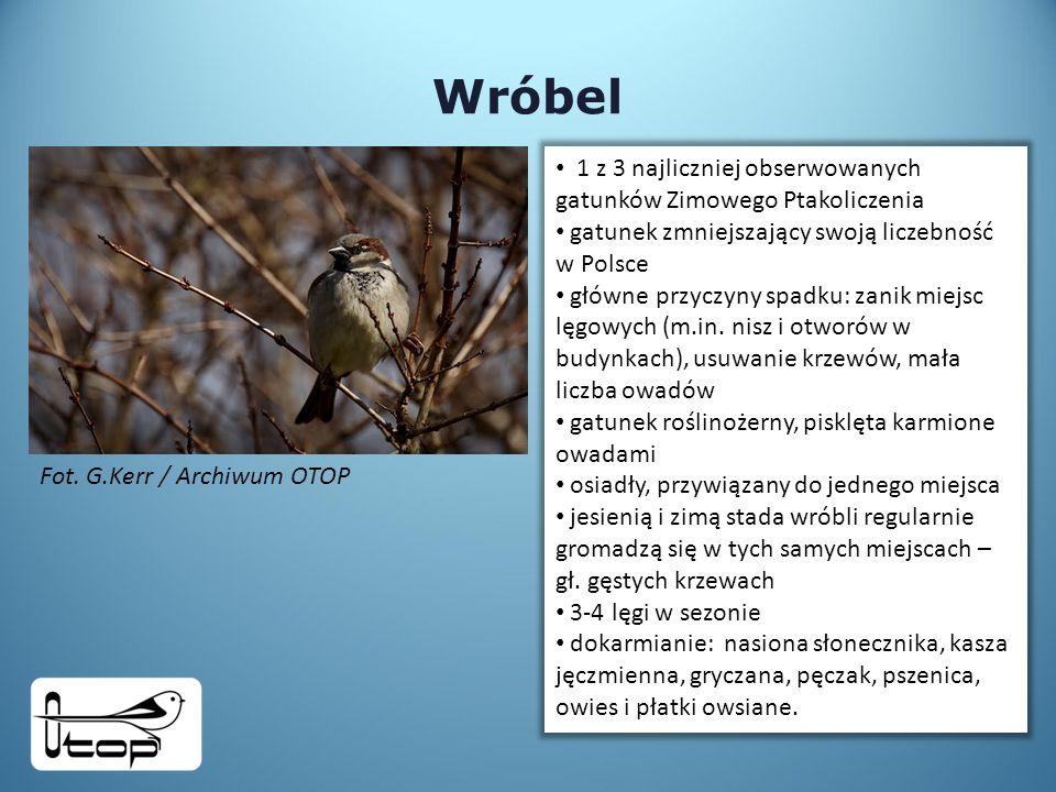 Wróbel 1 z 3 najliczniej obserwowanych gatunków Zimowego Ptakoliczenia gatunek zmniejszający swoją liczebność w Polsce główne przyczyny spadku: zanik miejsc lęgowych (m.in.