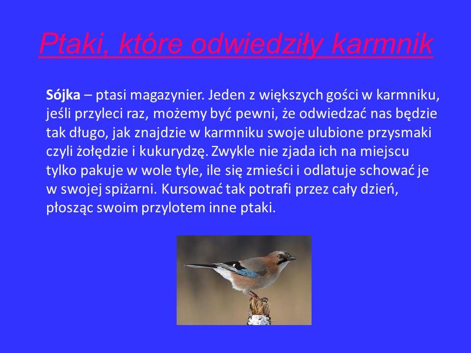 Ptaki, które odwiedziły karmnik Kos – jeden z największych gości zlatujący się do karmników, nie stroni od towarzystwa ludzi dlatego bardzo często spo