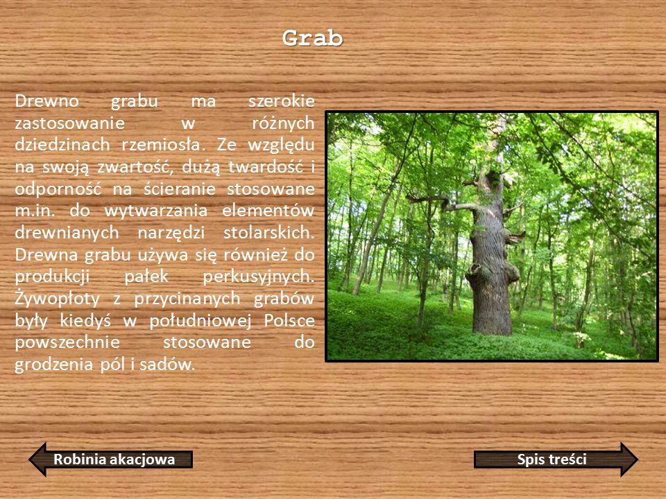 Grab Drewno grabu ma szerokie zastosowanie w różnych dziedzinach rzemiosła.