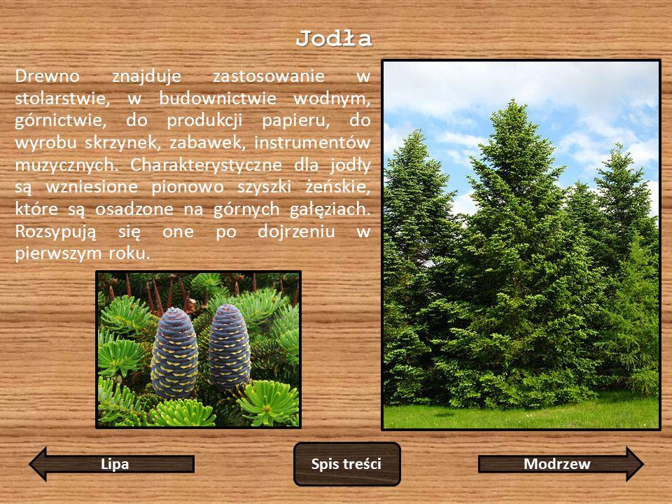 Jodła Drewno znajduje zastosowanie w stolarstwie, w budownictwie wodnym, górnictwie, do produkcji papieru, do wyrobu skrzynek, zabawek, instrumentów muzycznych.