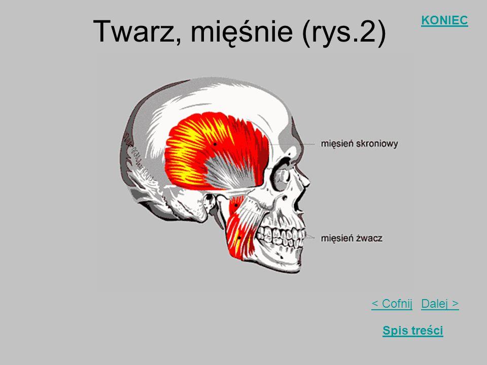 Dalej >< Cofnij KONIEC Spis treści Twarz, mięśnie (rys.1)