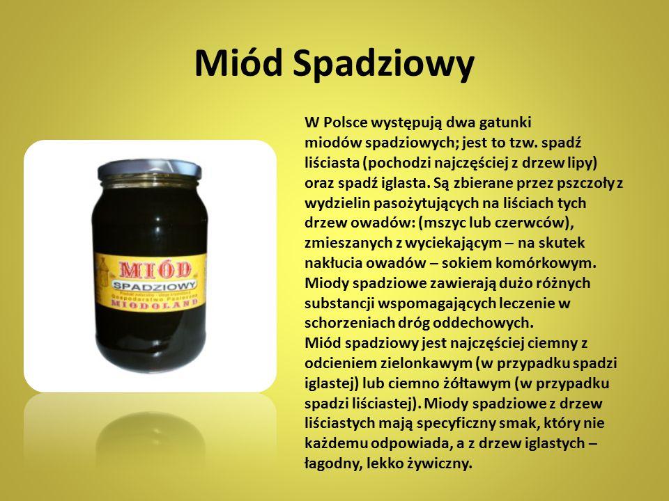 Miód Spadziowy W Polsce występują dwa gatunki miodów spadziowych; jest to tzw. spadź liściasta (pochodzi najczęściej z drzew lipy) oraz spadź iglasta.