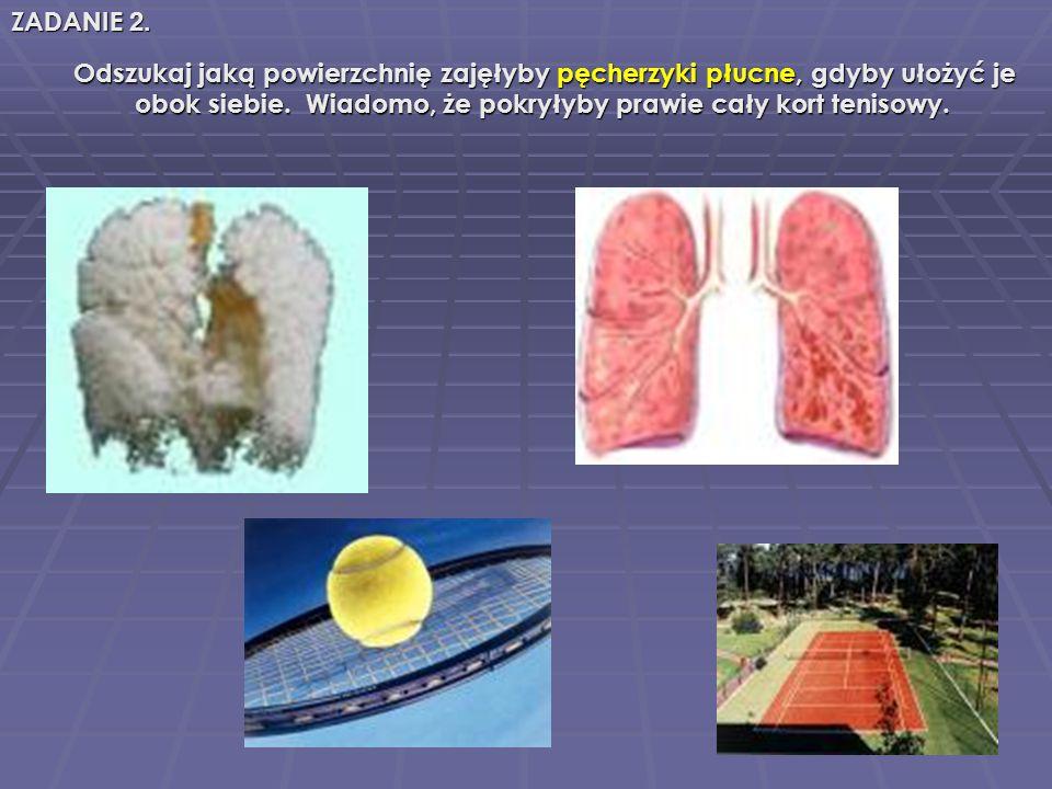 Odszukaj jaką powierzchnię zajęłyby pęcherzyki płucne, płucne, gdyby ułożyć je obok siebie. Wiadomo, że pokryłyby prawie cały kort tenisowy. ZADANIE 2