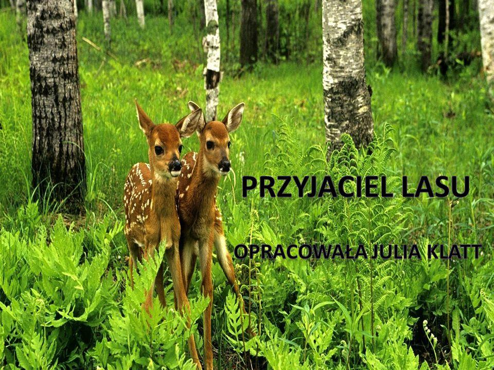 Święci Miłośnicy lasu i jego mieszkańców: Św.Franciszek z Asyżu Św.