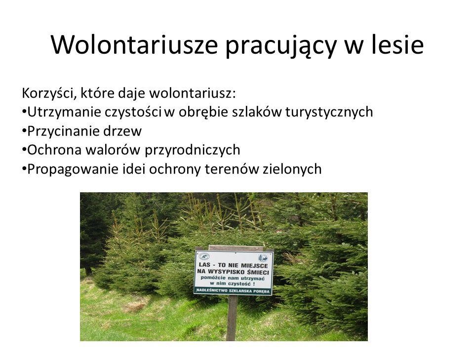 Wolontariusze pracujący w lesie Korzyści, które daje wolontariusz: Utrzymanie czystości w obrębie szlaków turystycznych Przycinanie drzew Ochrona walo