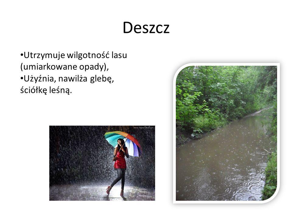 Deszcz Utrzymuje wilgotność lasu (umiarkowane opady), Użyźnia, nawilża glebę, ściółkę leśną.